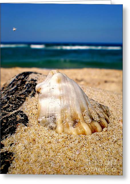 Ocean Beyond A Shell Greeting Card by Kaye Menner