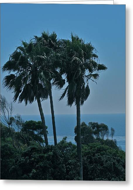 Ocean Brezze Palms Greeting Card