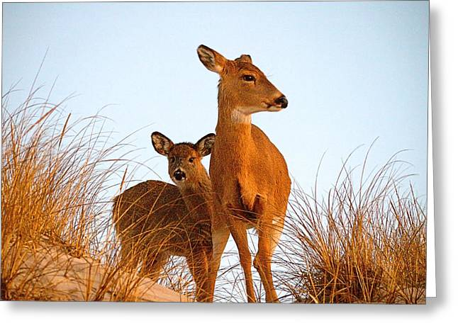 Ocean Deer Greeting Card by  Newwwman