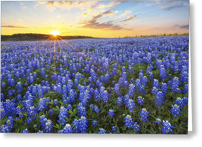 Ocean Of Bluebonnets At Sunset 1 Greeting Card