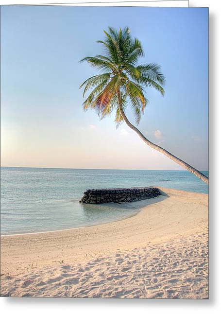 Ocean Palm Greeting Card