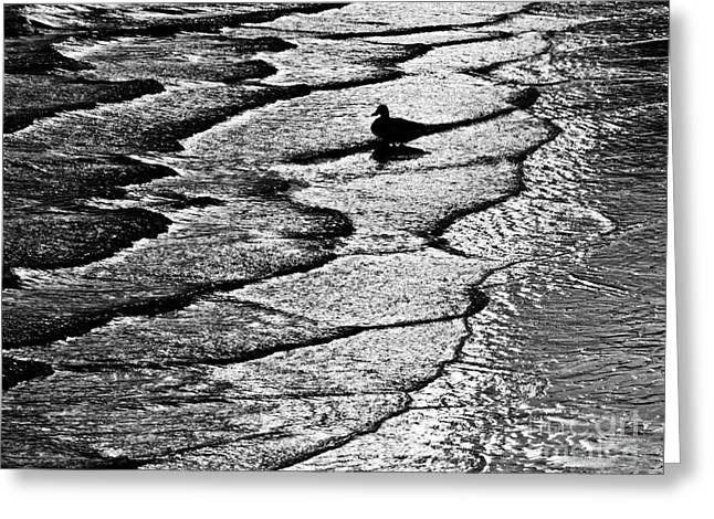 Ocean Surf Beach Scene In Black And White Format Greeting Card by Carol F Austin
