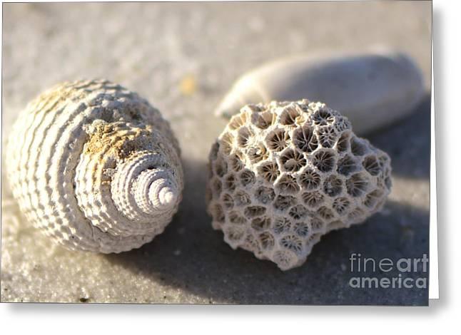 Ocean Treasures Greeting Card by Lauren Medina