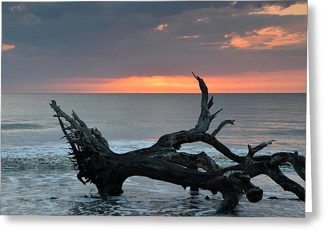 Ocean Treescape At Sunrise Greeting Card by Bruce Gourley