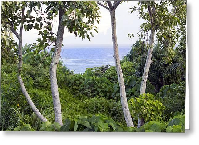 Ocean View Through Jungle Greeting Card