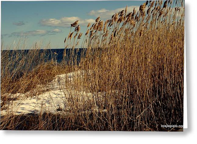Ocean View Through The Grasses Greeting Card by Lois Lepisto