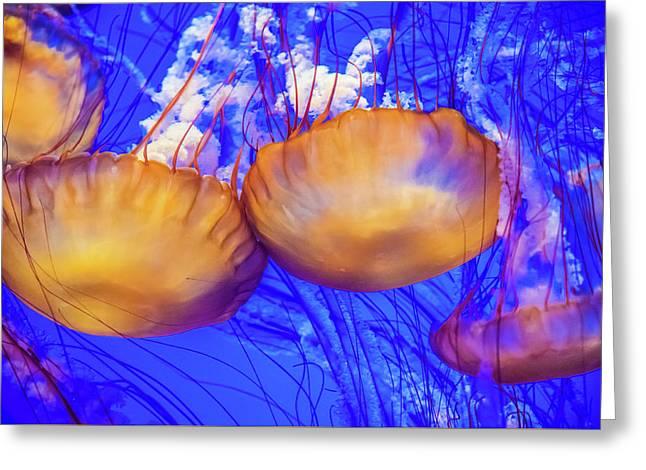 Ocean Wonders Greeting Card by David Litman