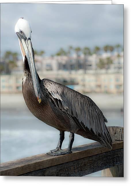 Oceanside Pelican Greeting Card