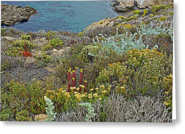 Oceanside Wildflower Garden In Point Lobos State Reserve Near Monterey-california  Greeting Card by Ruth Hager