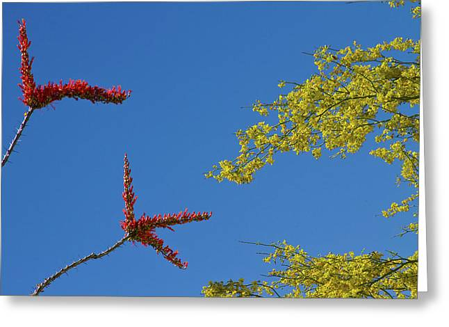 Ocotillo And Palo Verde Blooms Waving In The Wind Greeting Card