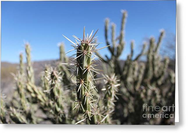 Greeting Card featuring the photograph Ocotillo by Antonio Romero