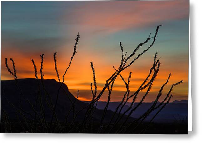 Ocotillo At Sunset Greeting Card