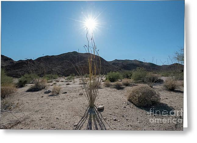 Ocotillo Glow Greeting Card