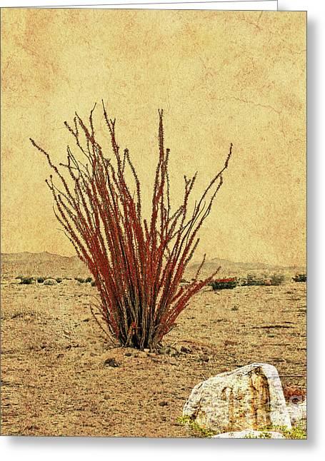 Ocotillo - The Desert Coral Greeting Card by Gabriele Pomykaj