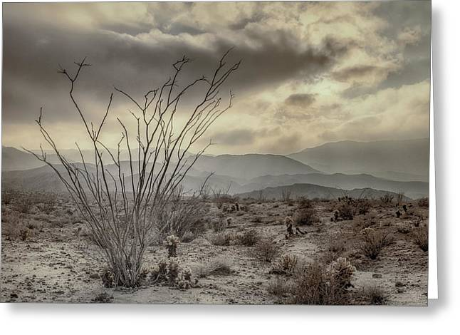 Ocotillo With Storm Clouds Greeting Card