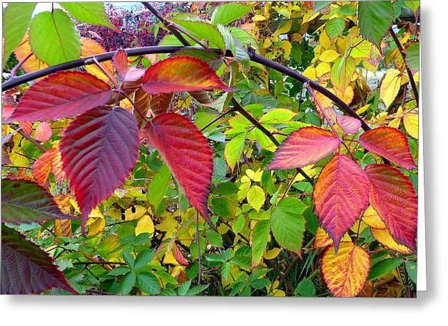 October Blackberry Leaves Greeting Card by Will Borden