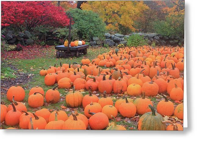 October Harvest Greeting Card by John Burk