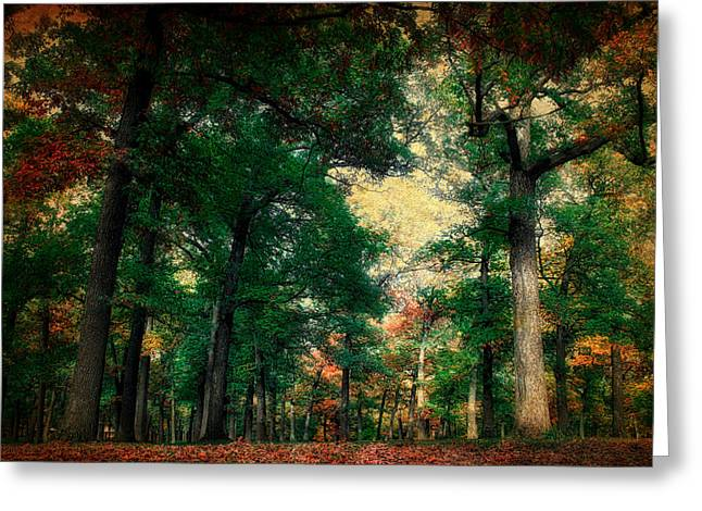 October In The Forest Textured 02 Greeting Card by Thomas Woolworth