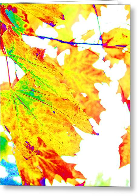 October Leaves Greeting Card by Nick Gustafson