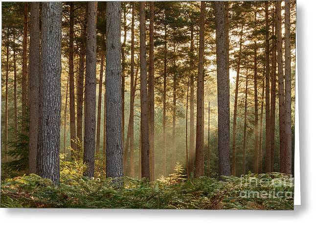 October Morning New Forest Greeting Card by Richard Thomas