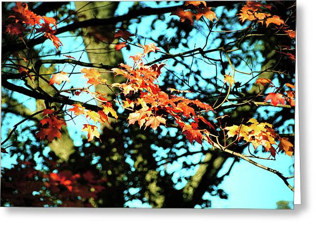 October Road Greeting Card by JAMART Photography
