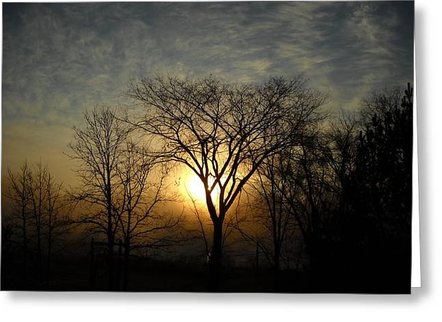October Sunrise Behind Elm Tree Greeting Card
