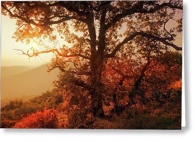 October Sunset Greeting Card