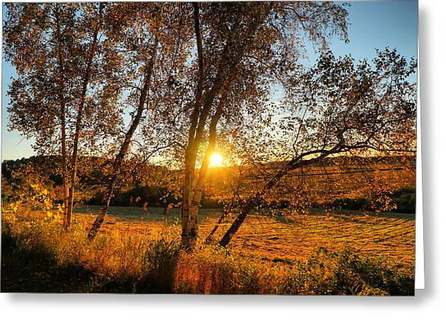 October Sunset Golden Glow Greeting Card by Lilia D