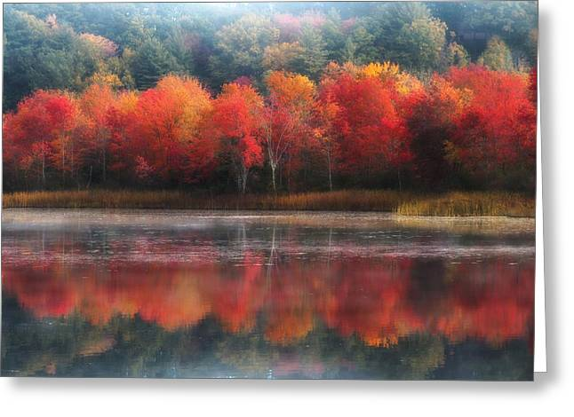 October Trees - Autumn  Greeting Card