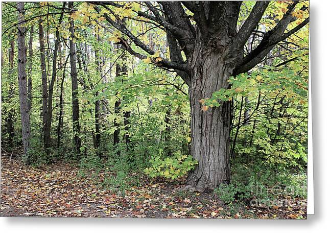 October Trees Greeting Card