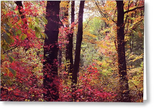 October Woodland Greeting Card