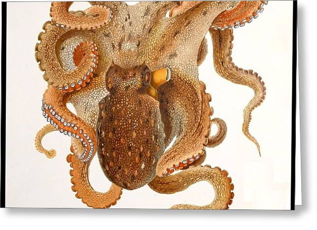 Octopus Vulgaris Lam. Greeting Card