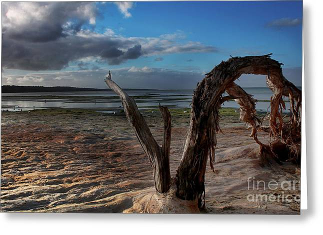 Ode To The Estuary Greeting Card by Kym Clarke