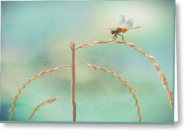 Odonata Greeting Card by Steven Michael