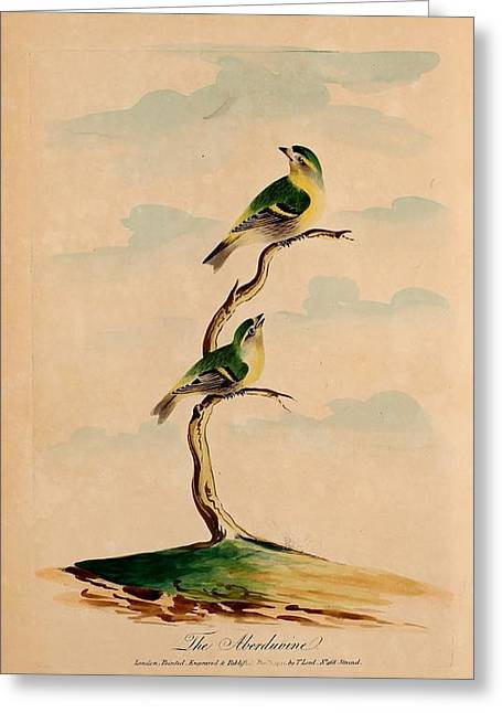 Oecumenical History Of British Birds Greeting Card by MotionAge Designs