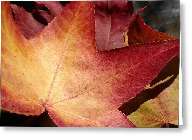 Of Fall Greeting Card by Frederick Messner