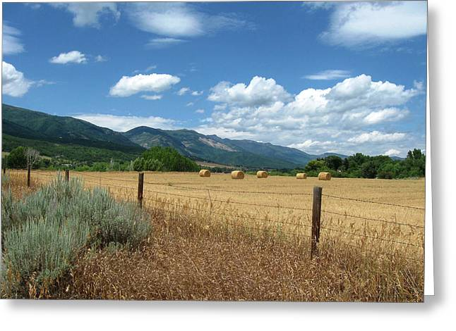 Greeting Card featuring the photograph Ogden Valley Hay Bales Photo by David King