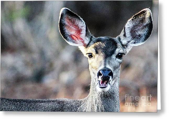 Oh, Deer Greeting Card
