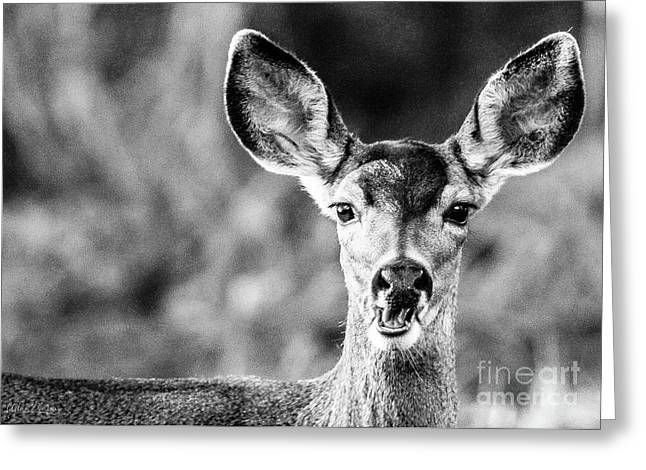 Oh, Deer, Black And White Greeting Card