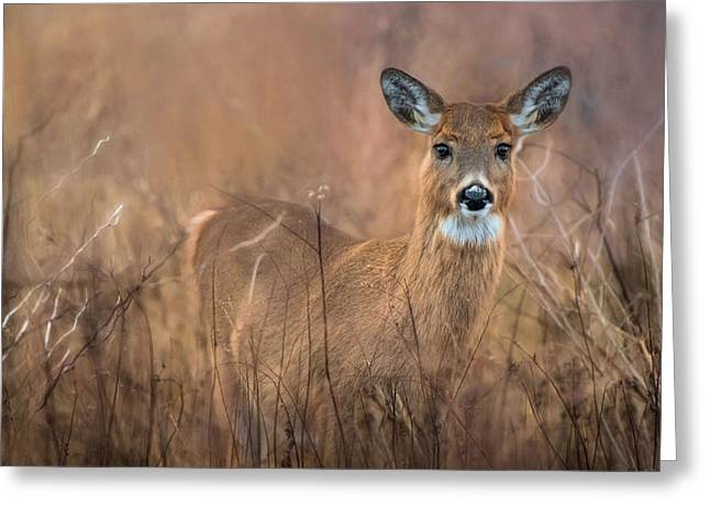 Greeting Card featuring the photograph Oh Deer by Robin-lee Vieira
