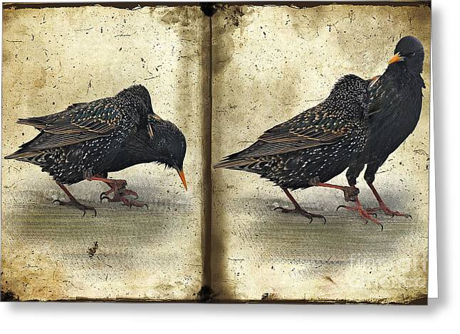 Oh No You Didn't Greeting Card by Lois Bryan