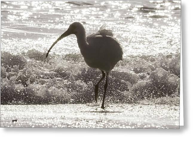 Oh Splash Me Cortez Beach Greeting Card by Betsy Knapp