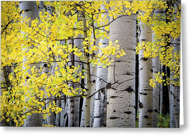 Greeting Card featuring the photograph Ohio Pass Gold by The Forests Edge Photography - Diane Sandoval