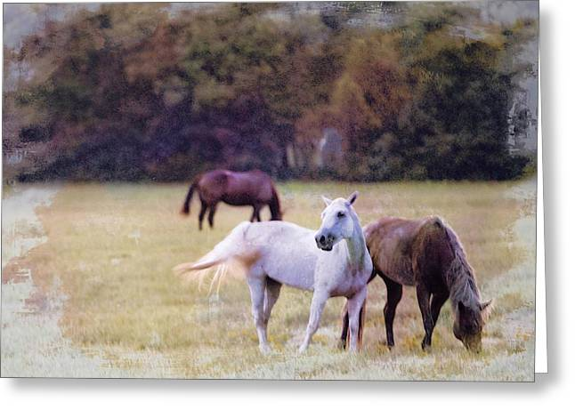 Ok Horse Ranch_1c Greeting Card