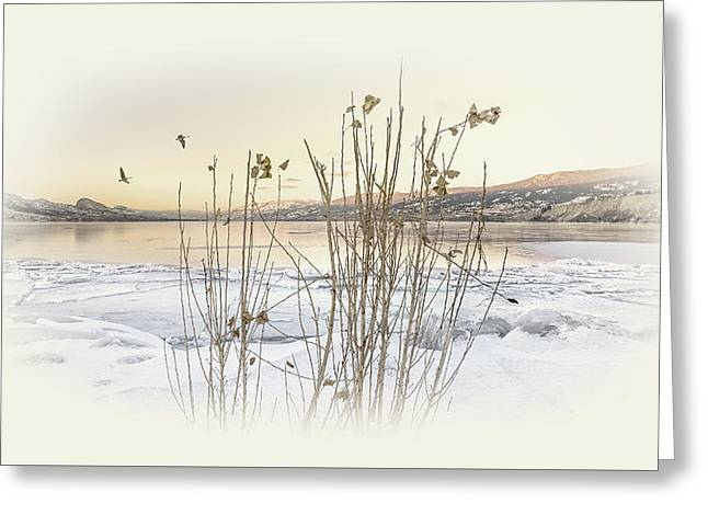 Greeting Card featuring the photograph Okanagan Glod by John Poon