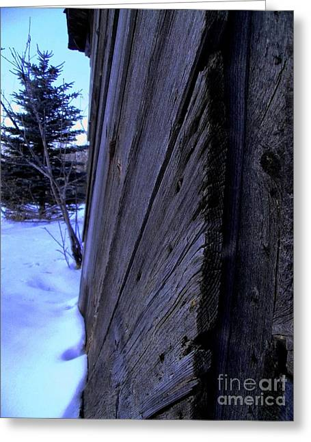 Old And Young Spruce Greeting Card by The Stone Age