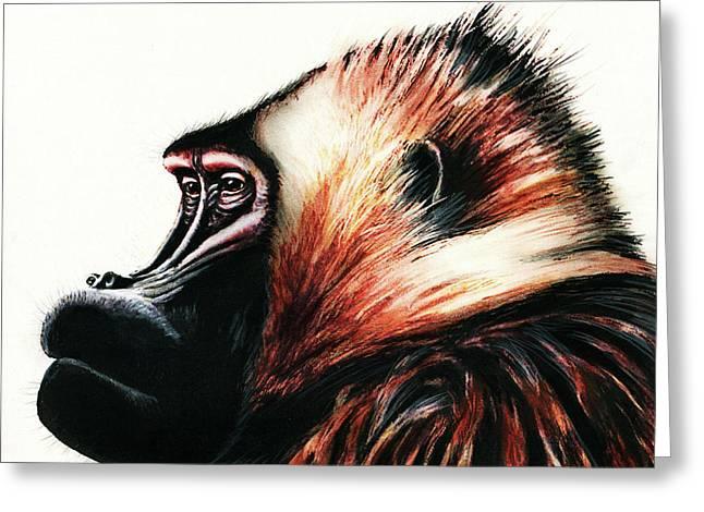 Old Baboon Animal Art Drawing Greeting Card