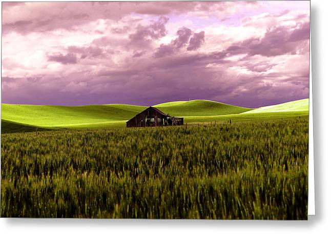Old Barn In A Pa-louse Wheat Field  Greeting Card