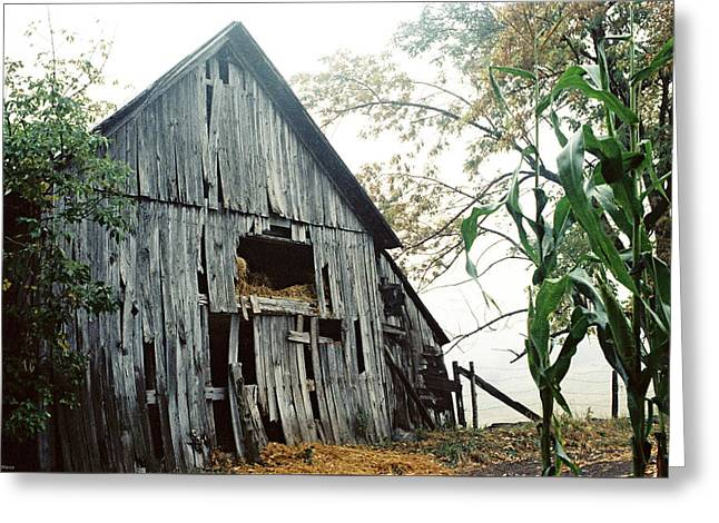 Old Barn In The Morning Mist Greeting Card