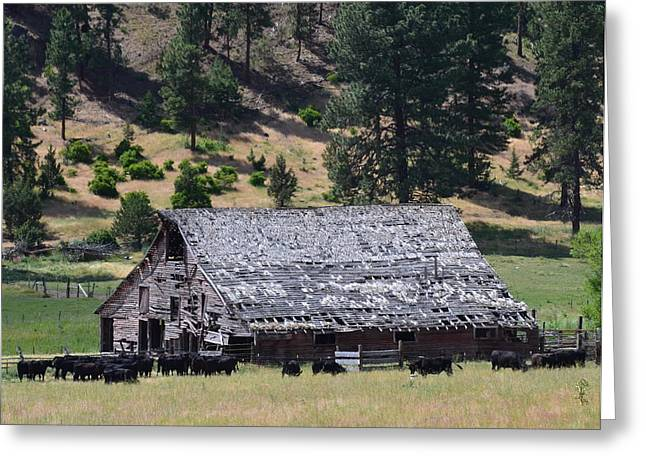Old Barn Greeting Card by Linda Larson